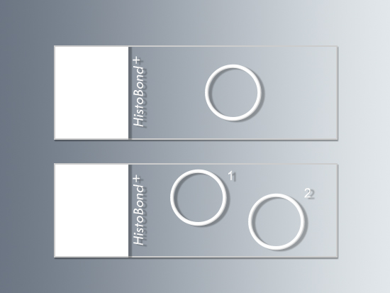 HistoBond®+ microscope slides with circles